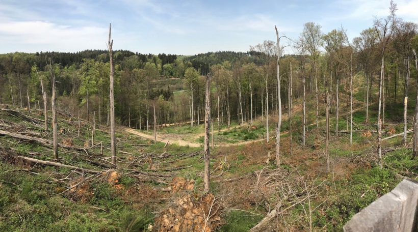 Beim Stuerm am Juli 2014 goufen am Härebësch tëscht Simmer a Käerch eng 100 Hektar Bësch verwüst