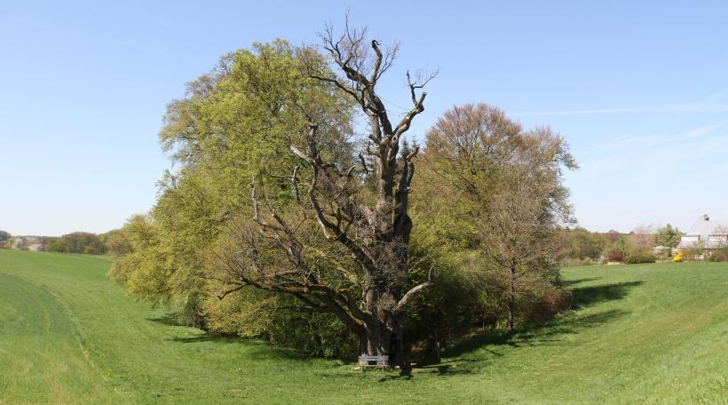 Maria Old Oak