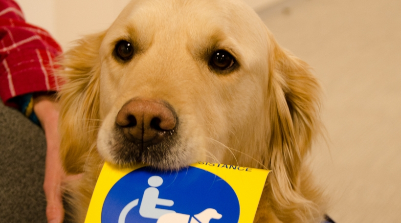 Hond mat Flyer