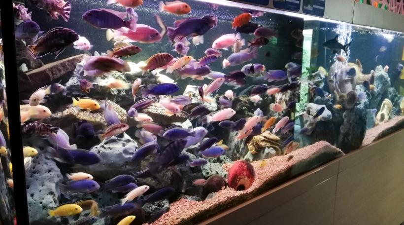 Aquarium Waasserbëlleg 2